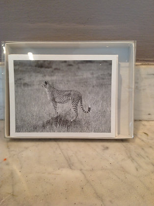 Nature/Wildlife Photography Note Cards