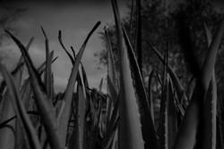 רבקה גלעד,הולכת בשדות 2, הדפס דיו,2020