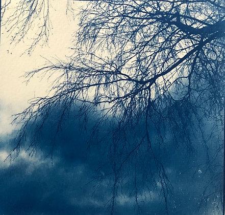 לוסי אלקויטי | עץ