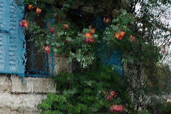 נינו הרמן   פרחים וחלון