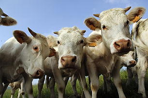 comice_agricole.jpg
