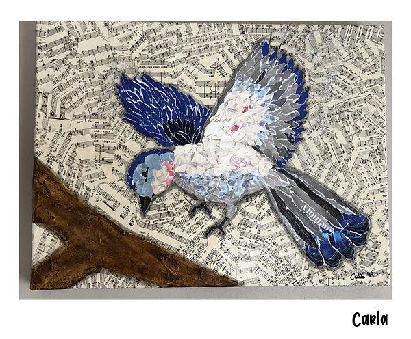 carla route 11 bird 1.jpg
