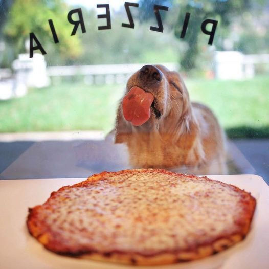 dog pizza.jpg