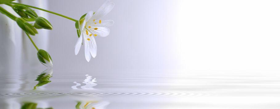 spring premium flower