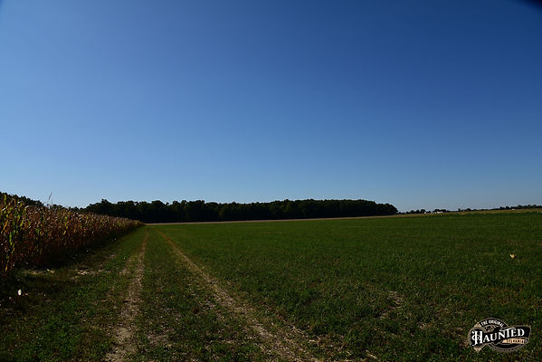 walking along the edge of a cornfield