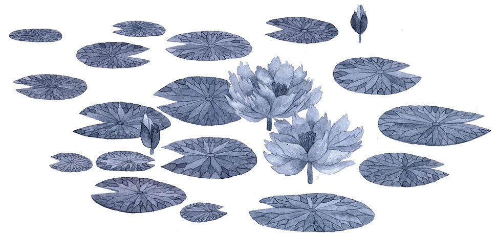 3_lotus_2.jpg