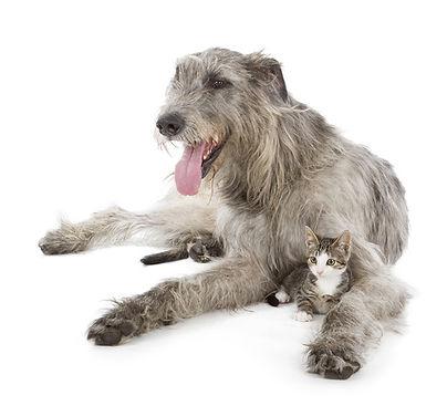 wolf-hund-katze.jpg