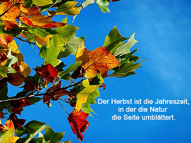 herbst-21-2.png