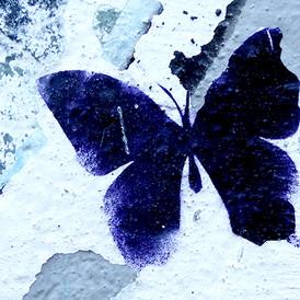 Midnight Butterfly