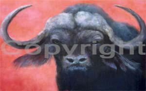 Water Buffalo III of III