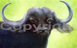 Water Buffalo I of III