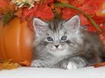 hikari mystique and felix 6 week mc kitt
