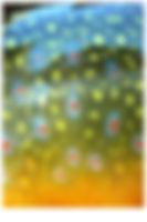 MC-mood_vert-fish.jpg