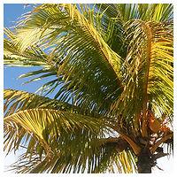 mood_square-palm.jpg