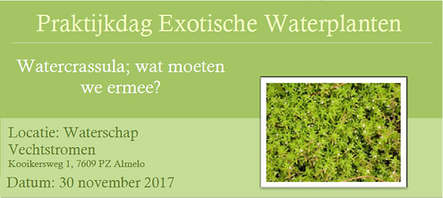 watercrassula