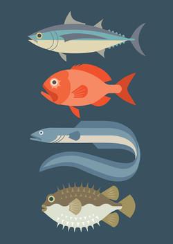 New Zealand Fish #2