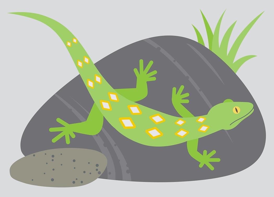 New Zealand Jewelled gecko