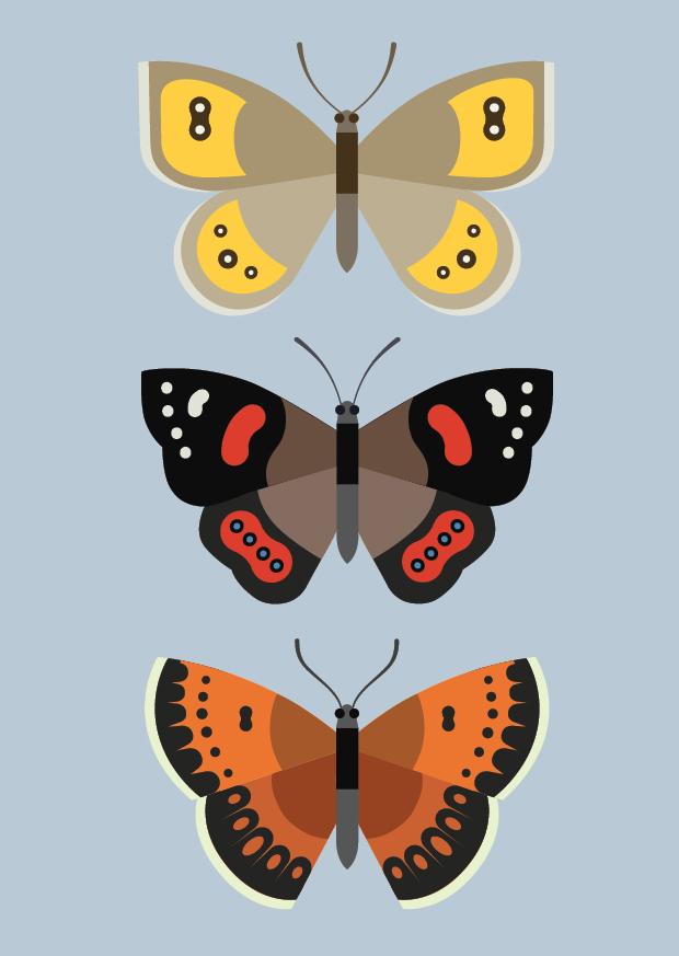 New Zealand Butterflies
