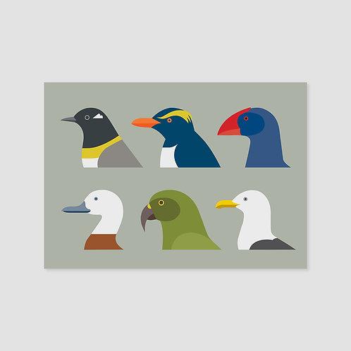 Birds of New Zealand #3