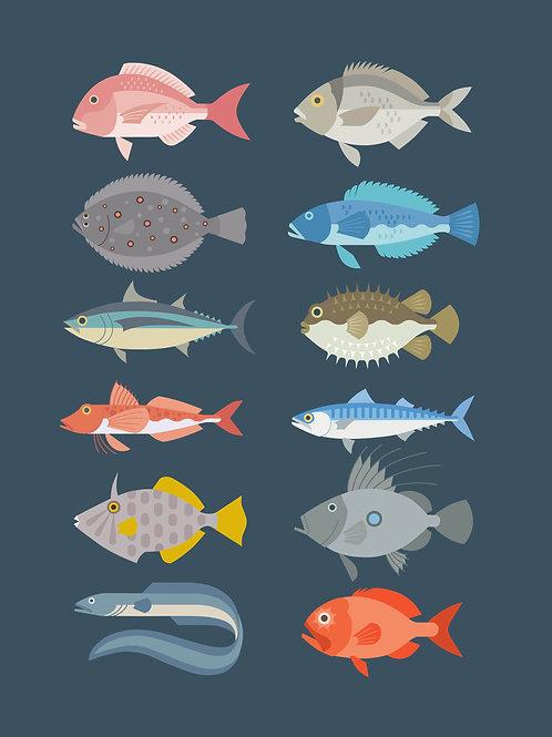New Zealand Fish