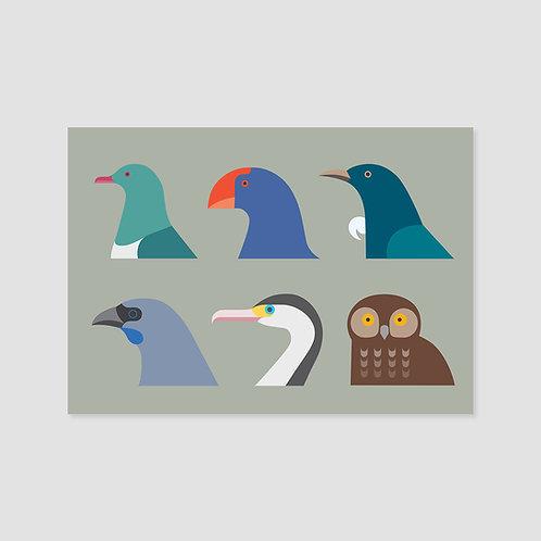 Birds of New Zealand #2
