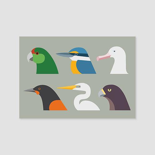 Birds of New Zealand #1