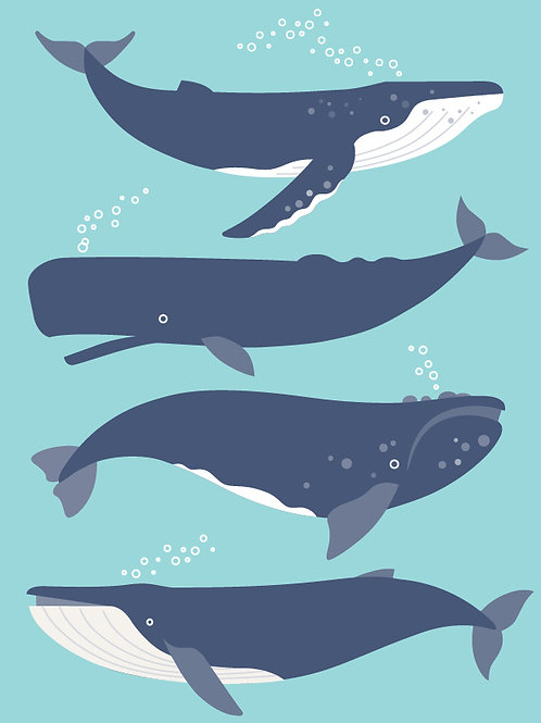 Whales of New Zealand