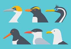 Ocean Birds New Zealand
