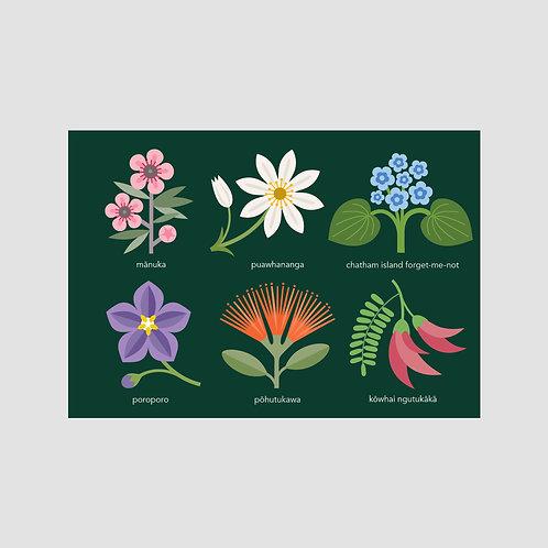 New Zealand Flowers #2