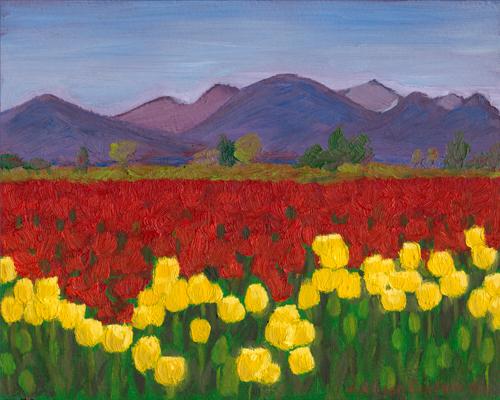 Tulips near La Conner
