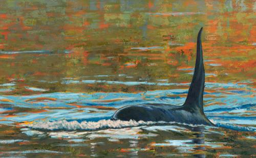 Transient Orca T49C