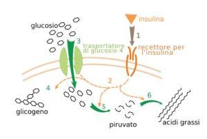 glicemia alta effetto insulina