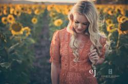 sunflowers024.jpg