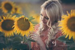 sunflowers001.jpg