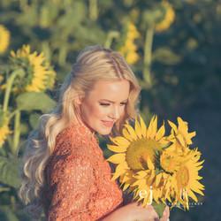 sunflowers031.jpg