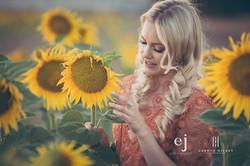 sunflowers010.jpg