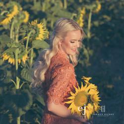 sunflowers034.jpg