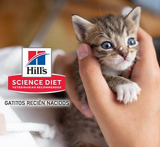 aliemnto para gatos hills