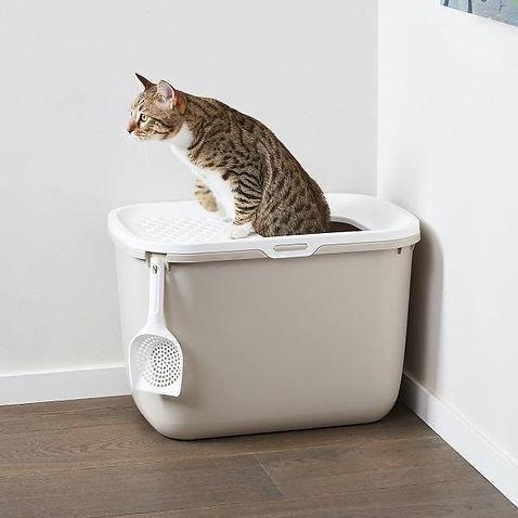 caja de arena para gatos peru