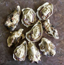 oyster shells faces
