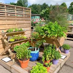 Herb Garden Display