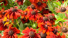 Plant of the Month - September
