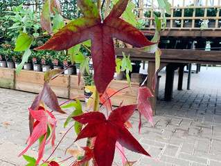Plant of the Month - October