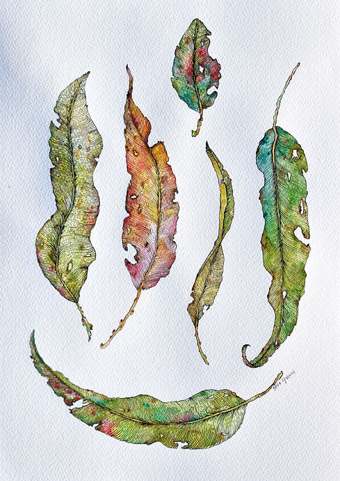 India Gladwood - Little Leaves, watercolour & ink on paper, 2018