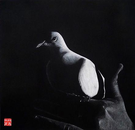 Virginie Senbel-Lynch | Dove Magic | watercolour pencil on black paper | 48 x 48cm | 2017