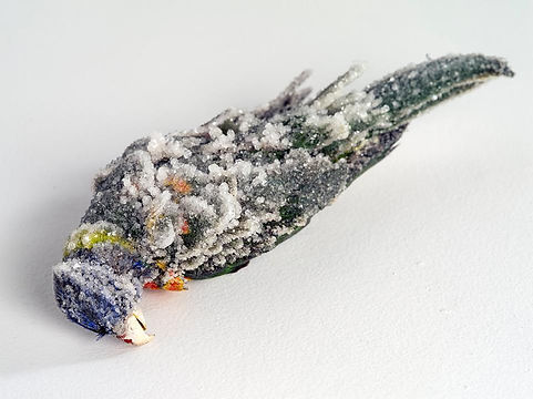 Elli Coleman, Lucent Creatures, taxidermy and crystals, variable, 2018