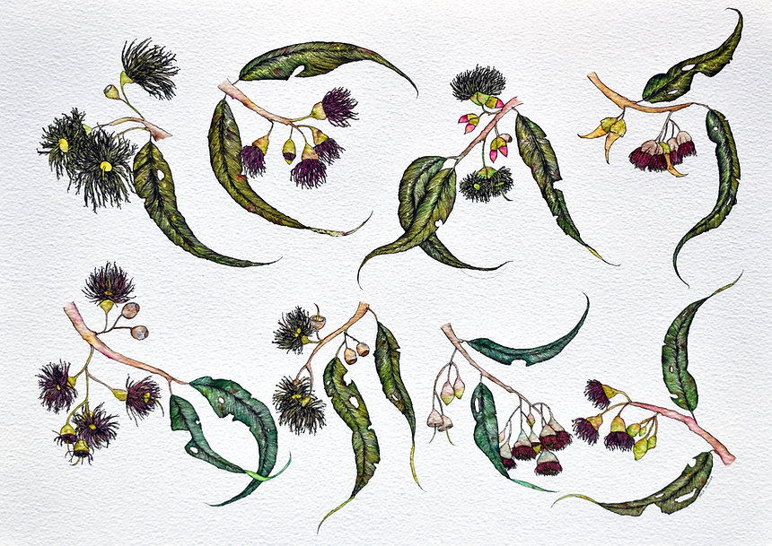India Gladwood - Species, watercolour & ink on paper, 2018
