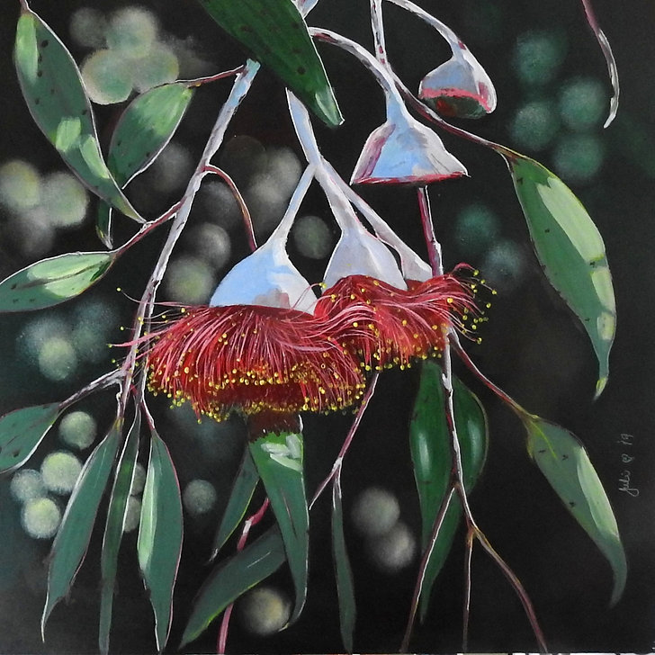 Julie Hollis, 'Gumnut Blossom', acrylic on canvas, 2019