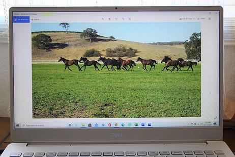 Online Courses tile picture.jpg