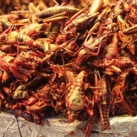 Insectos La proteína del futuro
